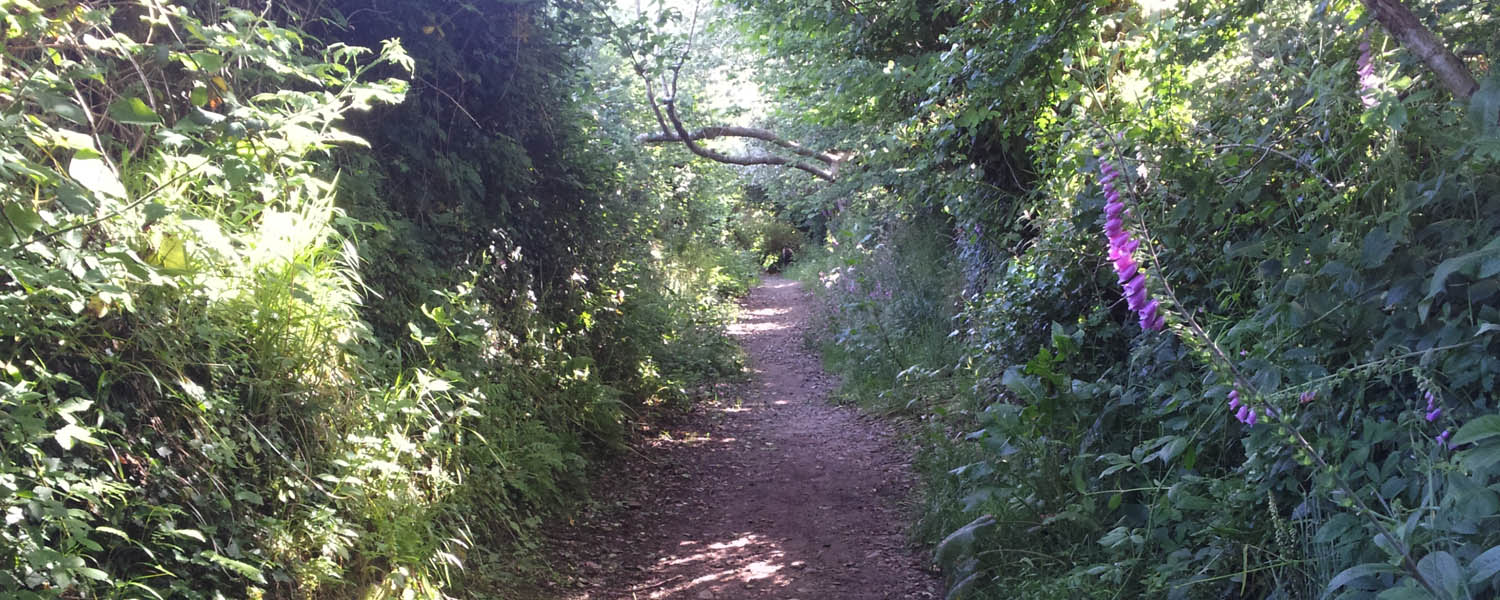 What do you think of our local footpaths?